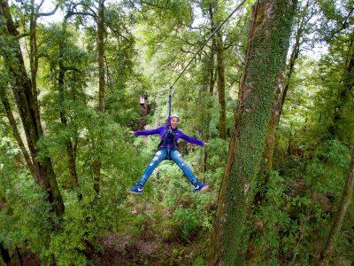 canopy-tour-rotorua-comoserunkiwi