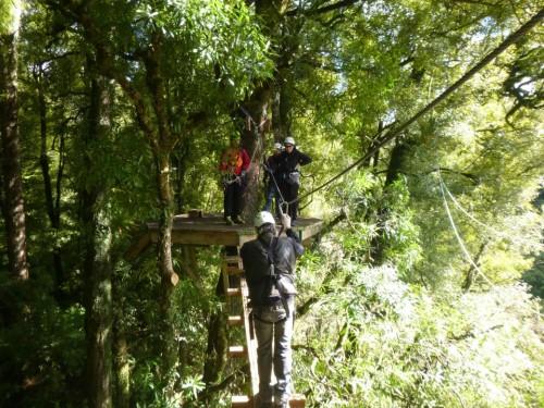 Mientras caminamos por el Rotorua Canopy Tour estaremos rodeados de vegetación