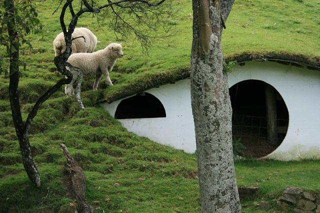 Ovejas pastando en el decorado de Hobbiton