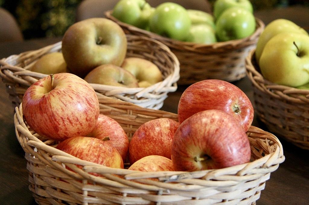Trabajar en la recogida de las manzanas está muy extendido