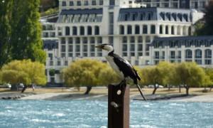 Cómo distinguir las aves de Nueva Zelanda