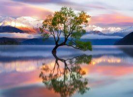 wanaka-nueva-zelanda-viaje-comoserunkiwi
