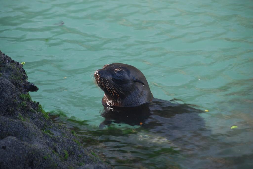 playa-wharariki-beach-foca-nueva-zelanda-comoserunkiwi
