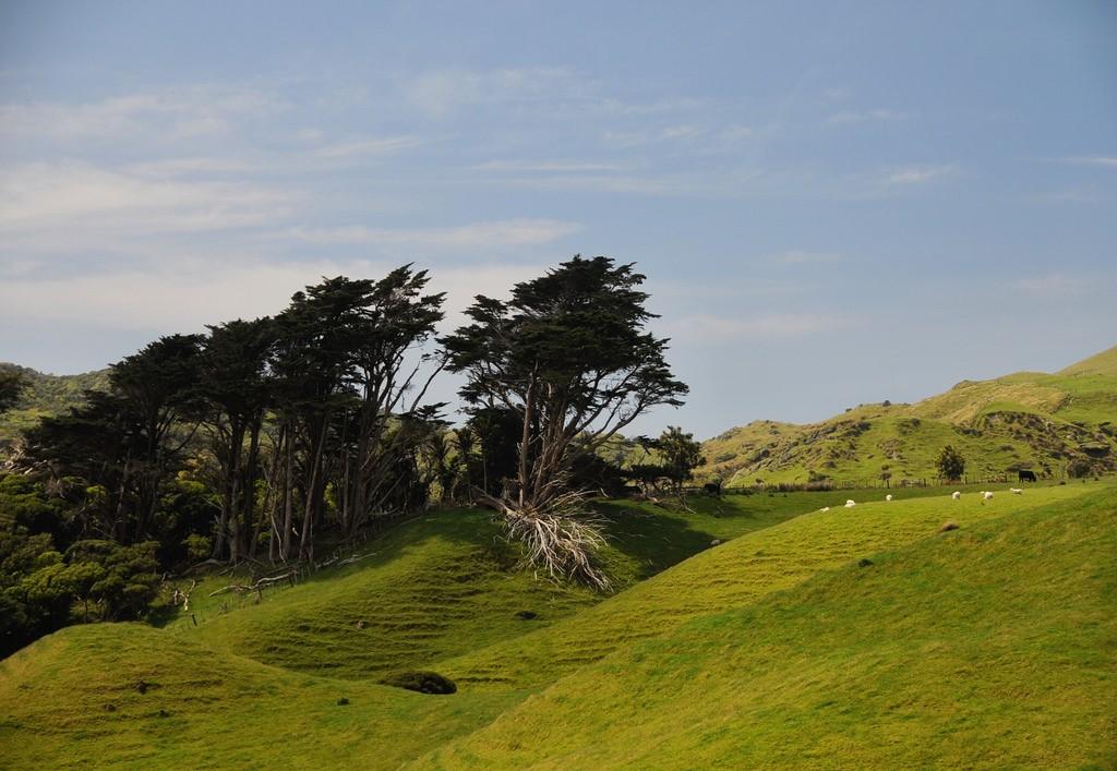 wharariki-beach-colina-nueva-zelanda-comoserunkiwi