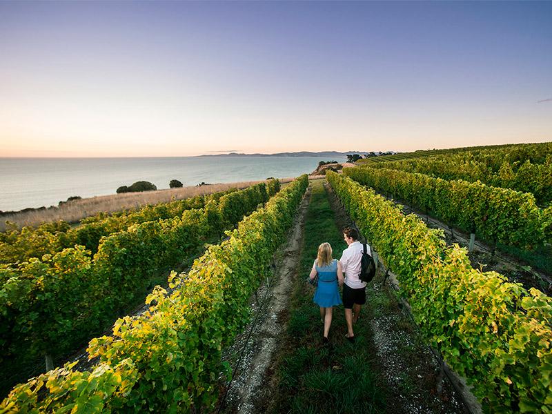 Pareja en un viñedo de Marlborough, Nueva Zelanda