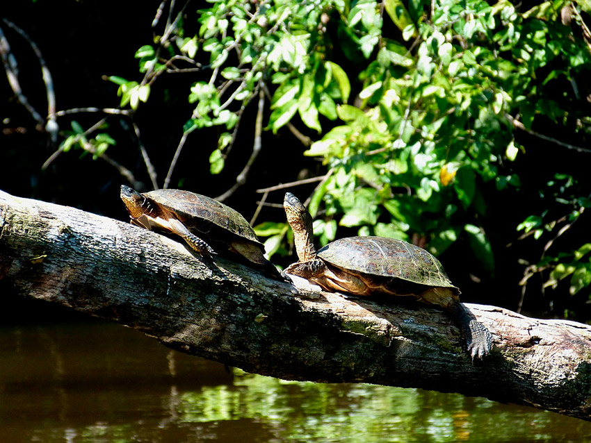 Parque Nacional Tortuguero de Costa Rica
