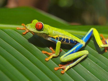 Destinos a los que me gustaría viajar: Costa Rica